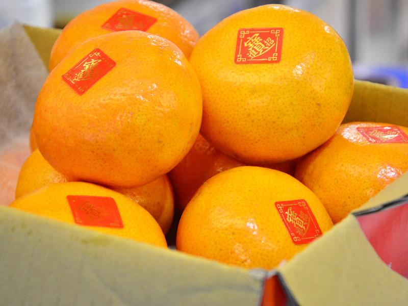 【春節送好禮】當季新鮮水果禮盒 台北送禮最實在